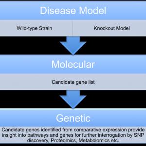 disease model