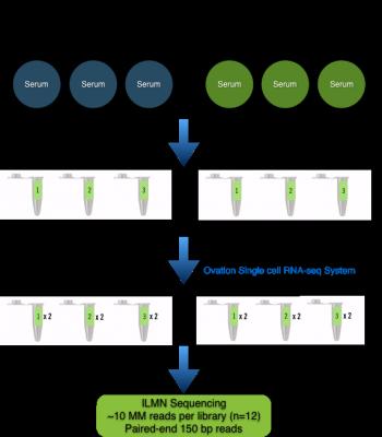 Molecular Workflow