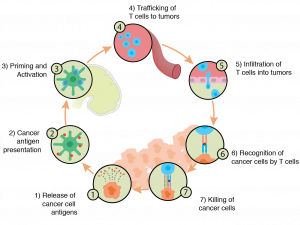 Cancer immune cycle in immune-oncology