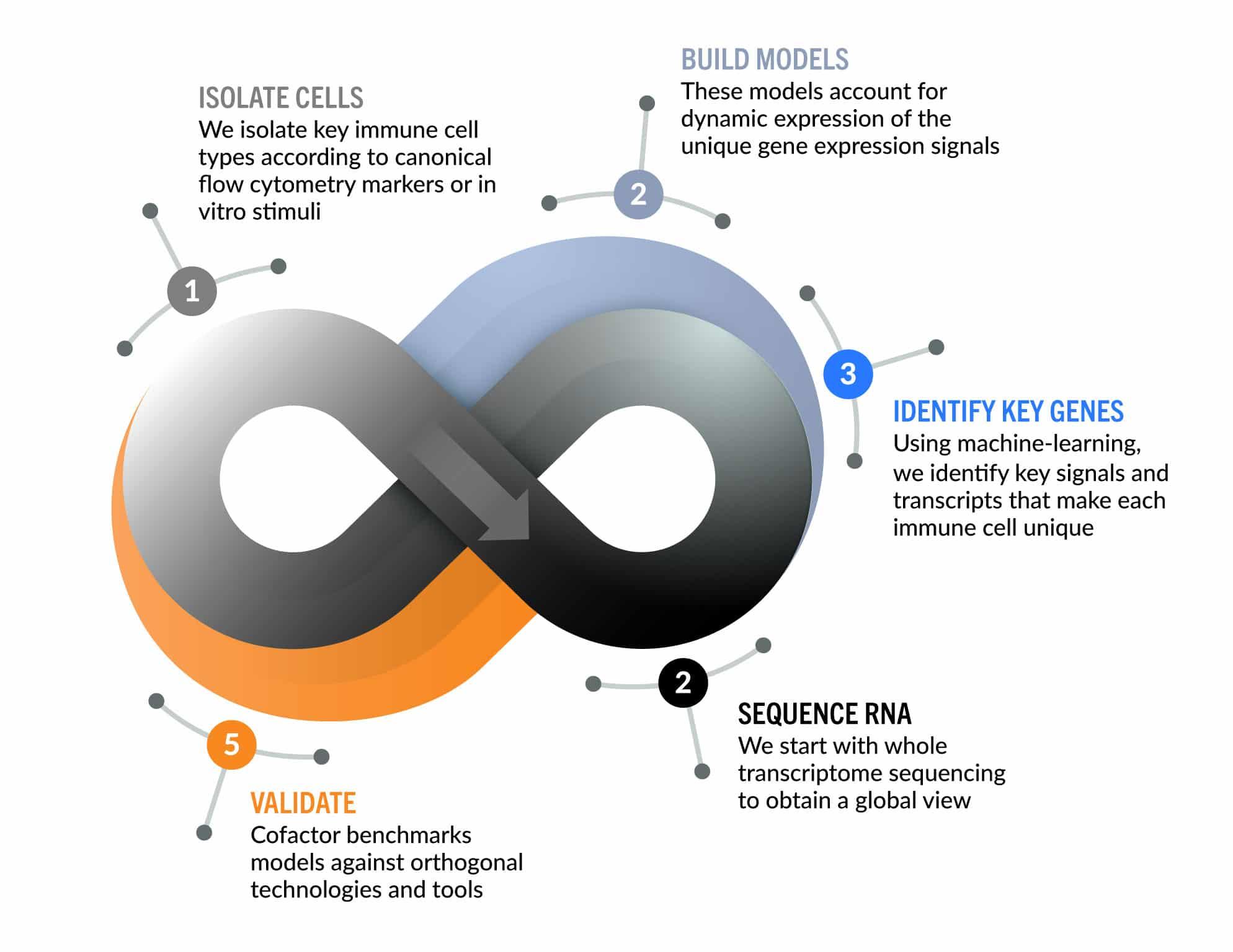 cofactor_investor-graphic-process
